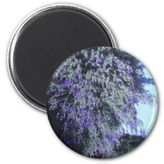 Imán floreciente púrpura del árbol