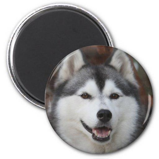 Imán fornido del perro