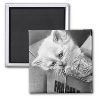 Imán frágil de la caja del gatito