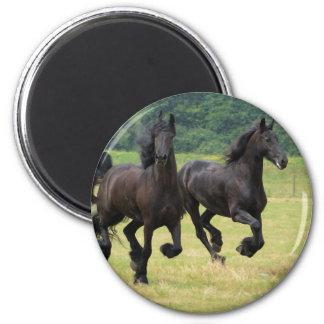 Imán frisio galopante de los caballos