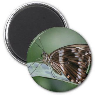 Imán gigante de la mariposa de Swallowtail