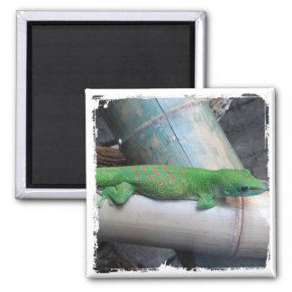 Imán gigante del cuadrado del Gecko del día de Mad
