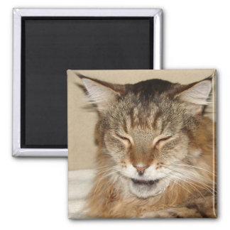 Imán grande del gatito
