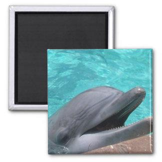 Imán hambriento del delfín