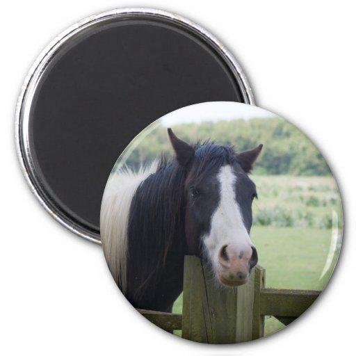Imán hermoso del primer de la cabeza de caballo, i