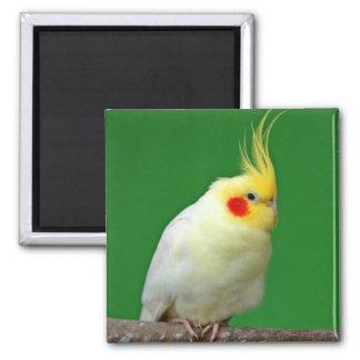 Imán hermoso del refrigerador de la foto del pájar