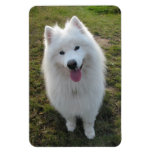 Imán hermoso del retrato de la foto del perro del