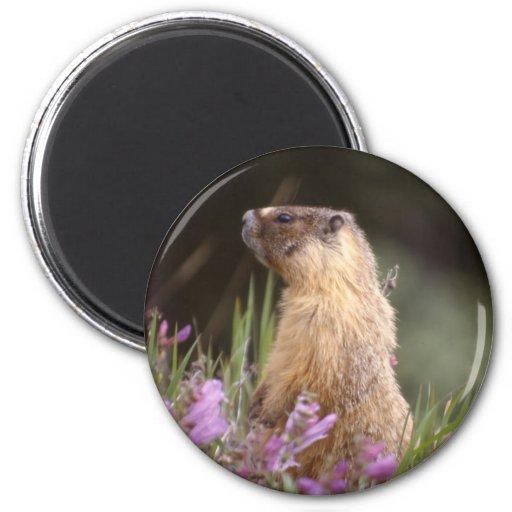 Imán hinchado amarillo de la marmota