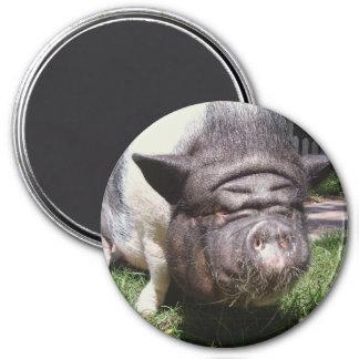 Imán hinchado pote del cerdo