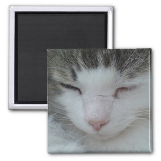 Imán - imagen 2 del gato de Coon de Maine