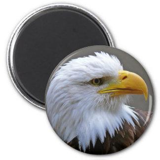 Imán imán de nevera águila de cabeza de weis