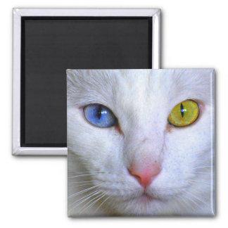 Imán impar de los ojos del gato turco del angora