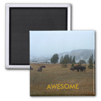 Imán impresionante del búfalo