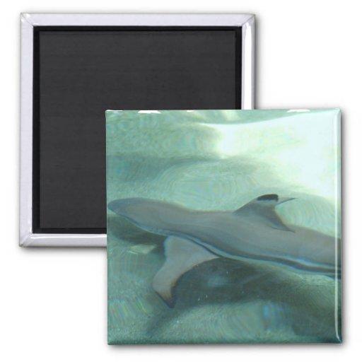Imán inclinado negro del tiburón