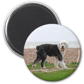 Imán inglés viejo del perro del perro pastor, foto