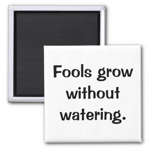 Imán italiano No.38 del proverbio