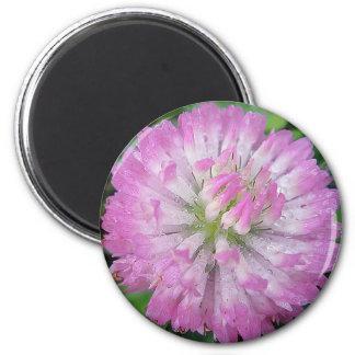 Imán Kleeblüte rosa con Wassertropfen