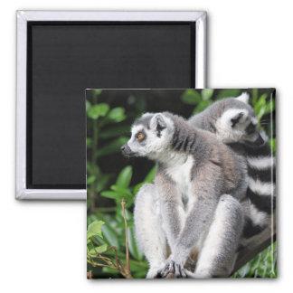 Imán lindo anillo-atado Lemur del refrigerador de