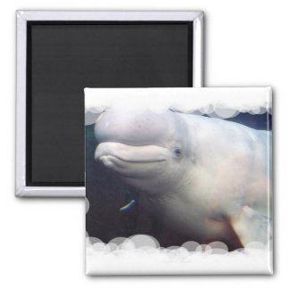 Imán lindo de la ballena de la beluga