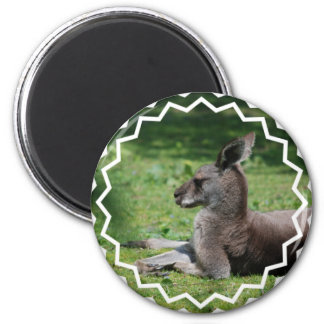 Imán lindo del canguro