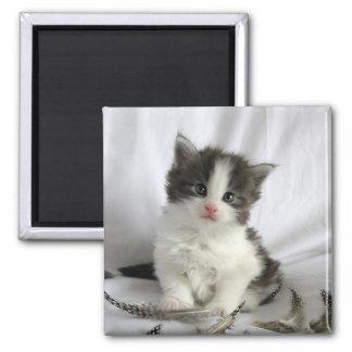 Imán lindo del cuadrado del gatito del Coon de Mai