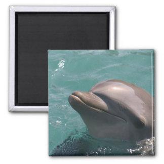 Imán lindo del delfín