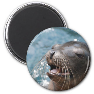 Imán lindo del león marino