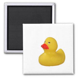 Imán lindo del pato de goma amarillo, idea del reg
