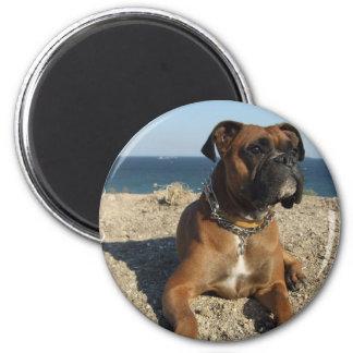 Imán lindo del perro del boxeador