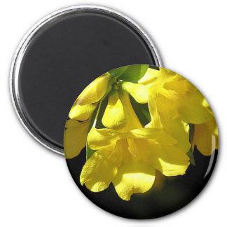 Imán llamativo del jazmín amarillo