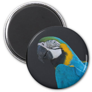 Imán, macaw, azul-y-oro imán redondo 5 cm