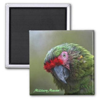Imán: Macaw militar (cuadrado) Imán Cuadrado