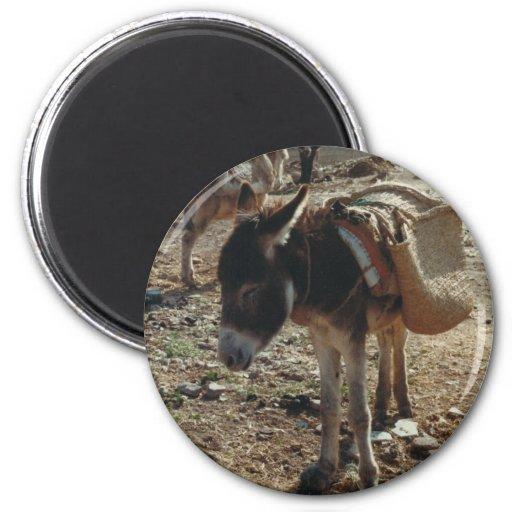 Imán marroquí de la mula