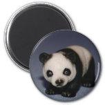 Imán minúsculo de la panda