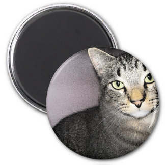 Imán modesto y poco impresionado del gato de Tommy