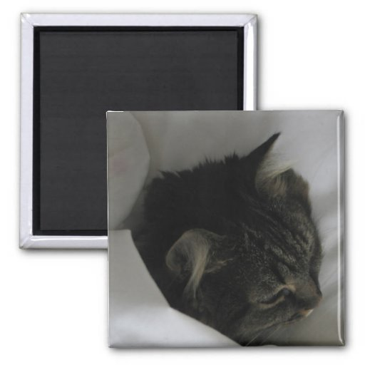 Imán Napping del gato