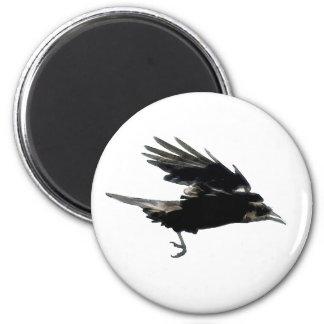 Imán negro de Birdlover del cuervo que vuela