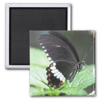 Imán negro de la mariposa