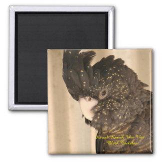 Imán negro del cockatoo
