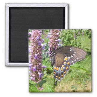 Imán negro del ~ de Swallowtail 63