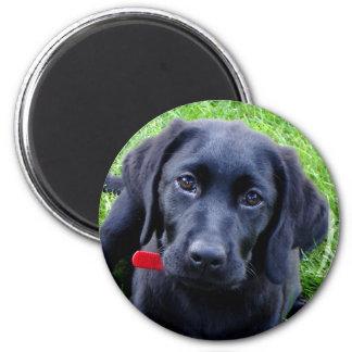 Imán negro del perrito del laboratorio