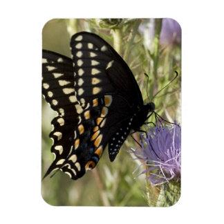 Imán negro del premio de la mariposa de Swallowtai