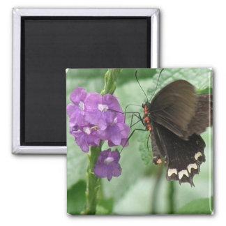 Imán negro lindo de la mariposa