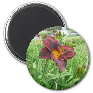 Imán negro marrón del lirio de n