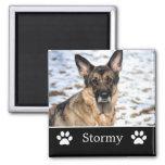 Imán negro personalizado de la foto del mascota