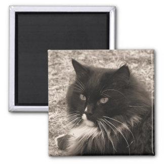Imán negro y blanco del gato de la muñeca de trapo