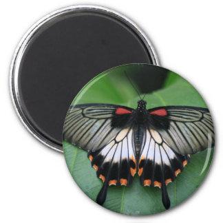 Imán negro y rosado de la mariposa de Swallowtail