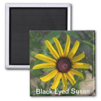 Imán observado negro de Susan