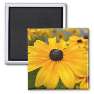 Imán observado negro de Susan de las flores del am