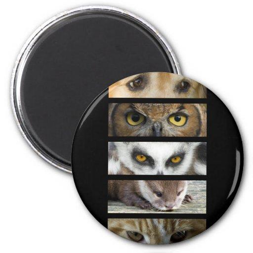 Imán - ojos de los animales